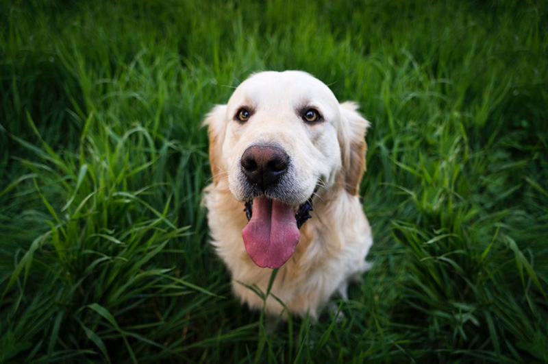 Dog In Grass 2