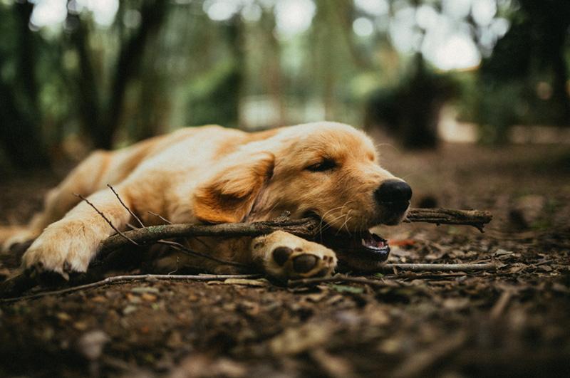 Dog In Grass 5