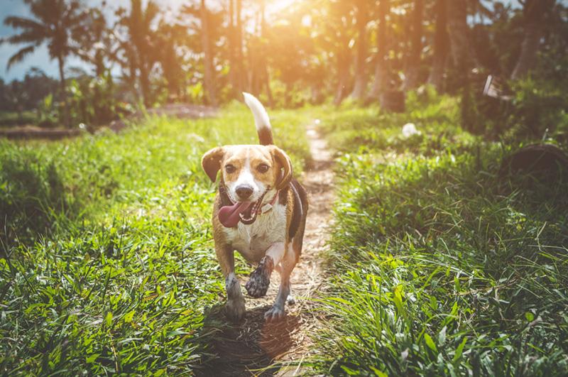 Dog In Grass 6