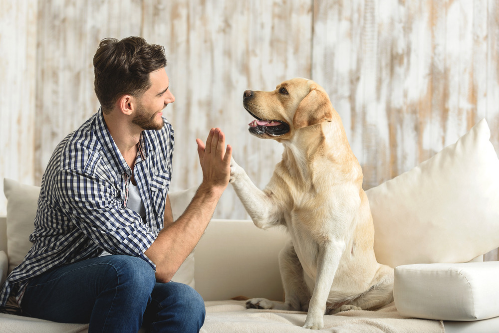 The Role of Pets in our Lives
