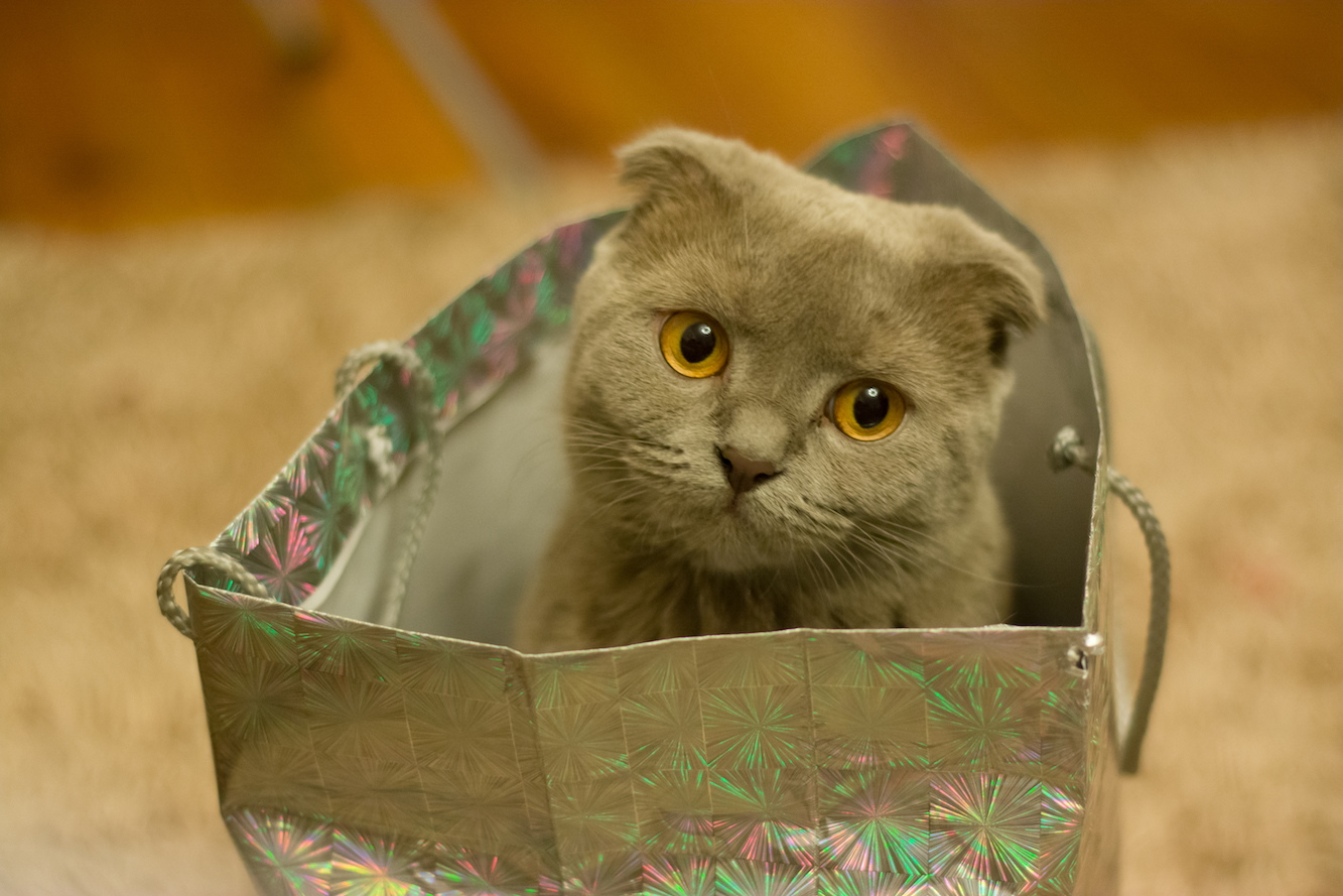 Awesomely Cute Cat In Bag